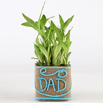 Father's Day Plant for Dad