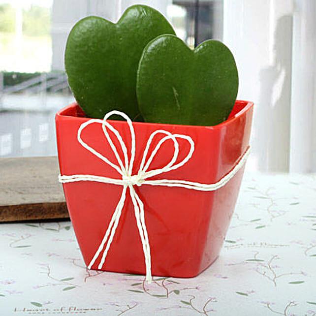 Gorgeous Love Plant