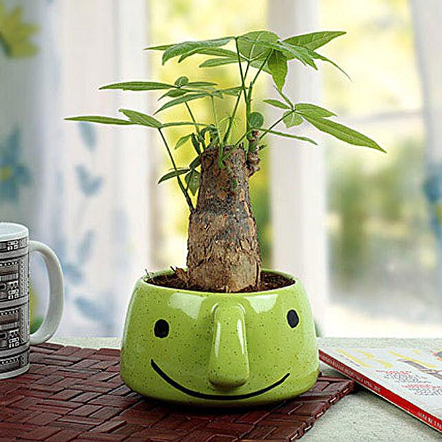 Pachira Bonsai In Smiley Vase