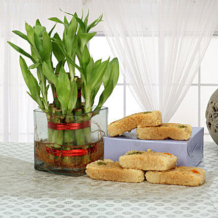 Lucky bamboo and  combo