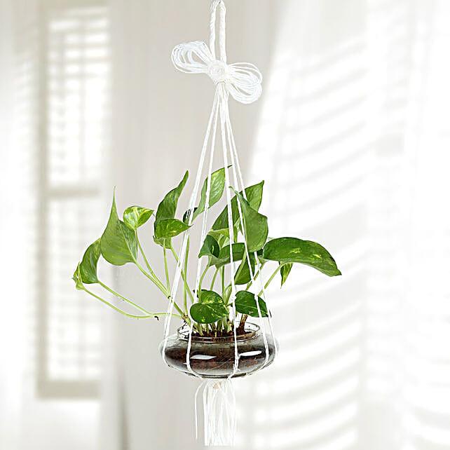 Home Decor Hanging Plant
