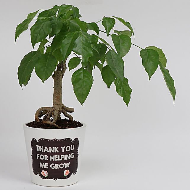 bonsai plant for teachers day