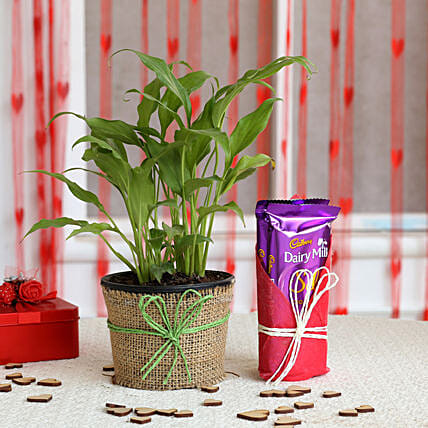 Lily Plant and Chocolate Combo  for valentine