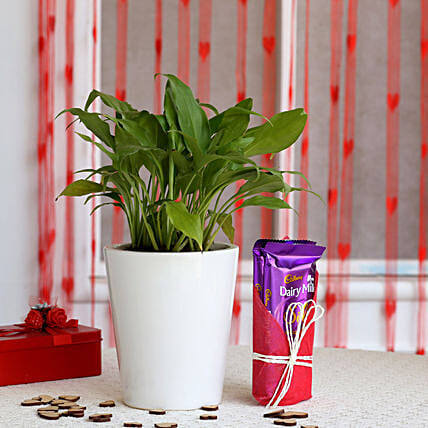 Peace Lily Plant in Ceramic Pot with Dairy Milk Silk