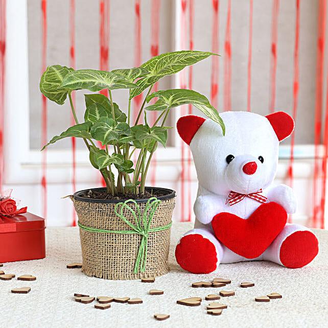 Syngonium Plant & Red Heart Teddy Bear Combo