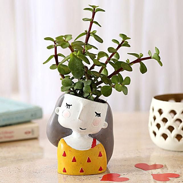 jade plants in customized pot:Foliage Plants