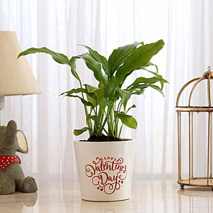 Peace Lily Plant In Happy Valentine Pot