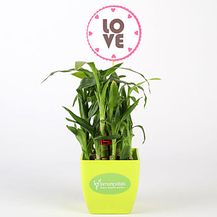 Two Layer Bamboo Plant In Green Pot With Love Tag