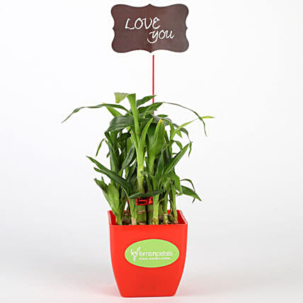 Two Layer Bamboo Plant In Red Pot With Love You Tag