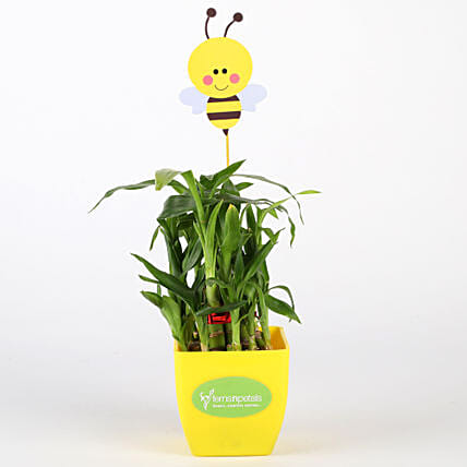Two Layer Bamboo Plant In Yellow Pot With Honey Bee Tag