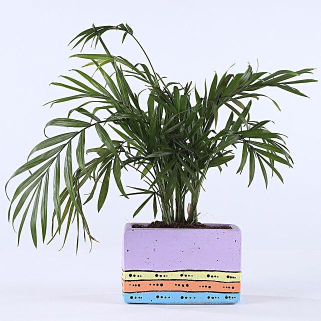 online plant with unique pot:Concrete Planters