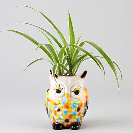Spider Plant In Resin Owl Pot