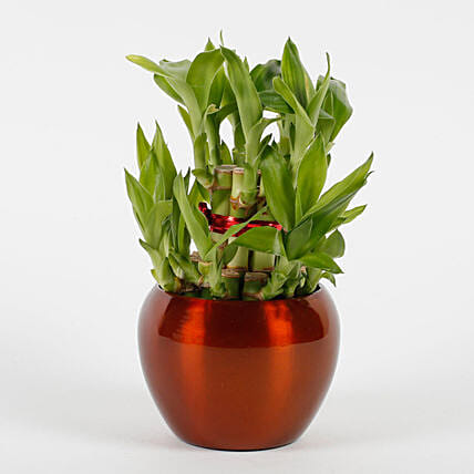 bamboo plant in brass metal pot:Foliage Plants