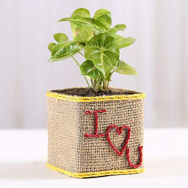 Love Printed Plant Online:Spiritual and Vastu Plants