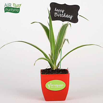 Spider Plant In Red Pot With Happy Birthday Tag