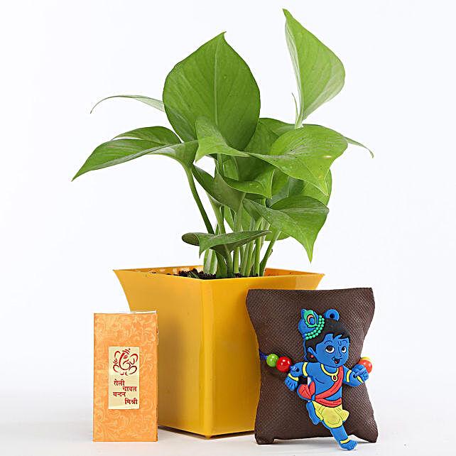 Money Plant In Yellow Pot Little Krishna Rakhi