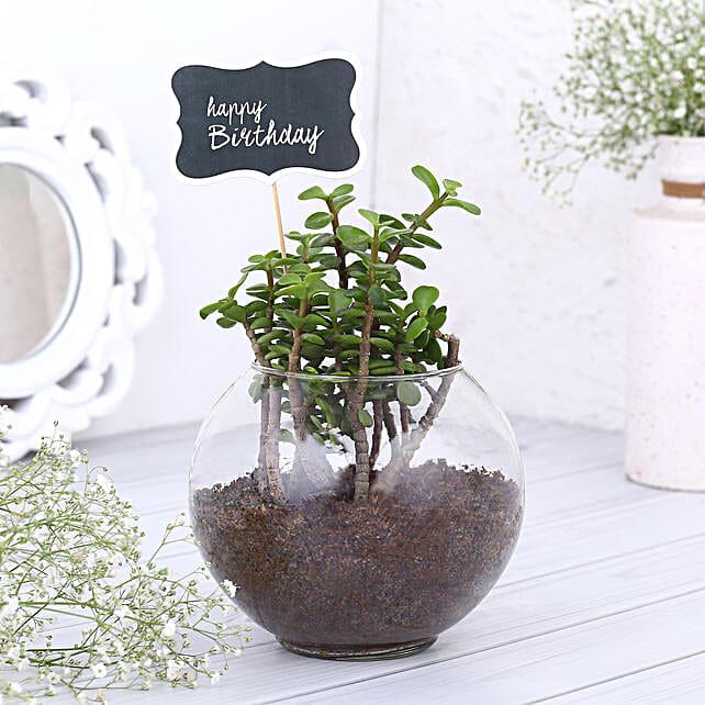 Happy Birthday Jade Plant Terrarium
