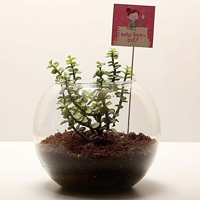 Teachers Day Jade Plant