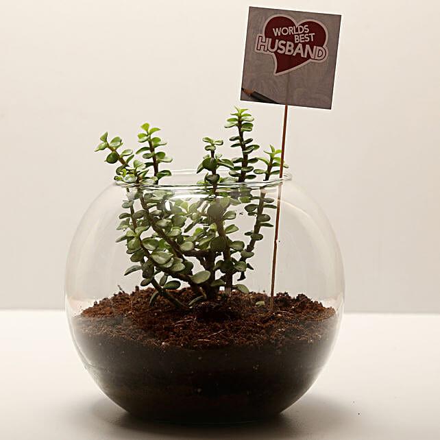 Jade Plant For Best Husband