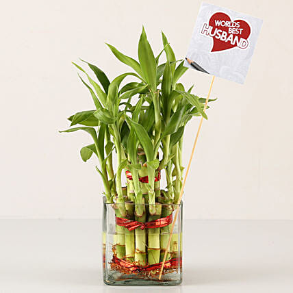 2 Layer Bamboo Plant For Best Husband