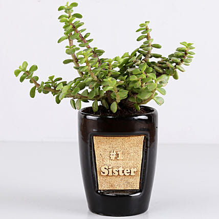 Jade Plant For Number 1 Sister