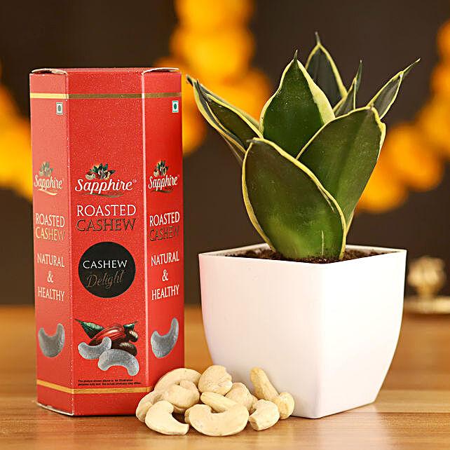 MILT Sansevieria & Roasted Cashews