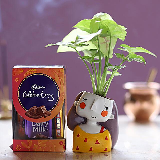 Online Cadbury Celebrations And Syngonium Plant