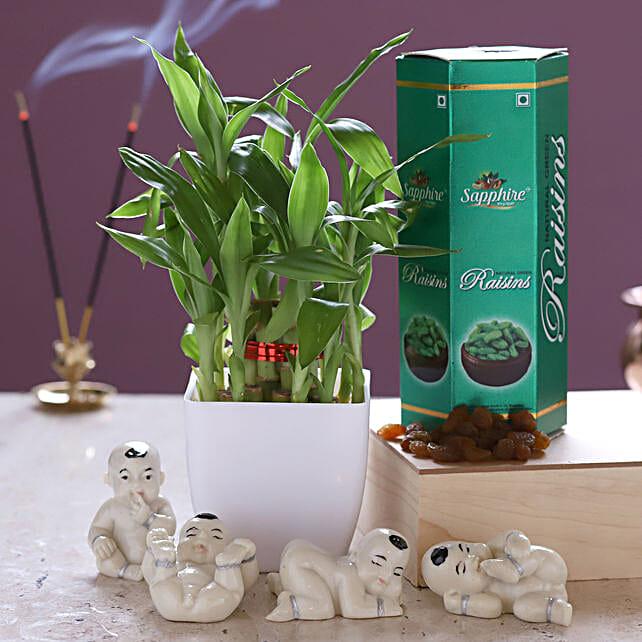 Lucky Bamboo White Pot & Raisins