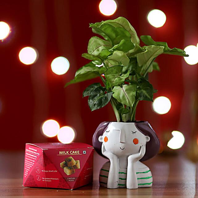 Syngonium Plant & Milk Cake Box