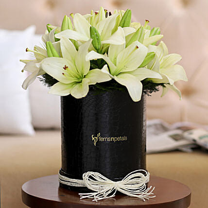 Graceful White Asiatic Lilies