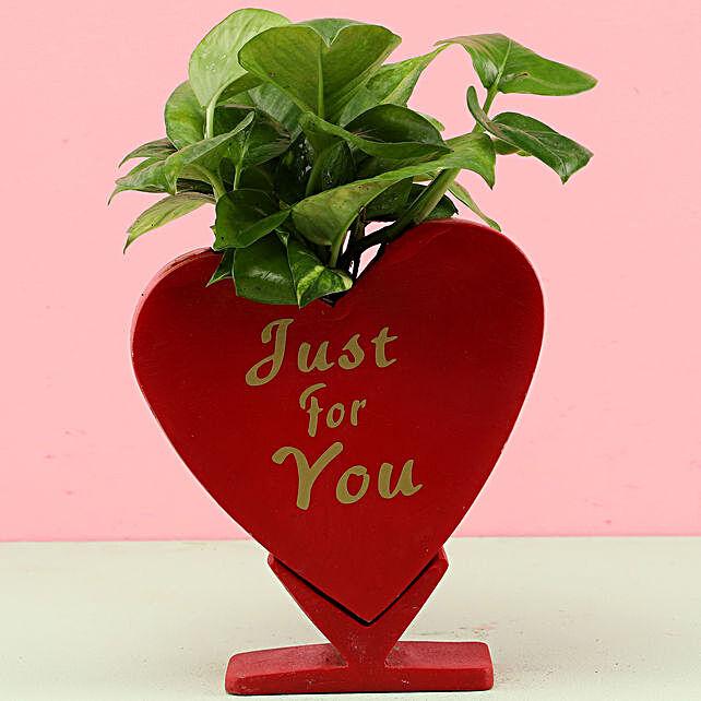 online money plant with heart shape pot:Fiber Planters