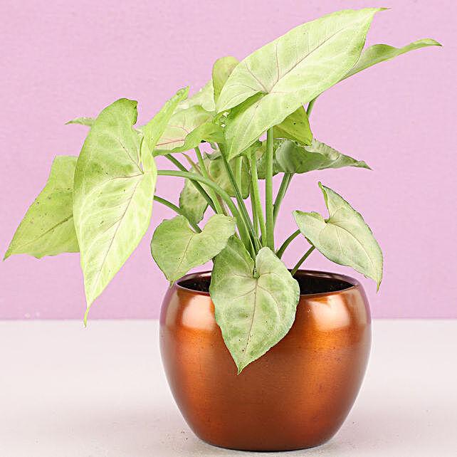 online plant for him