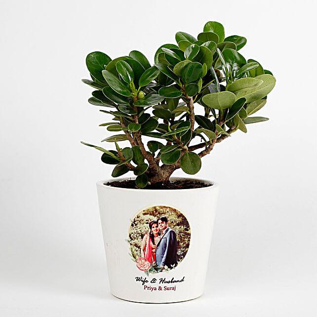 Ficus Dwarf Plant in White Personalised Ceramic Pot