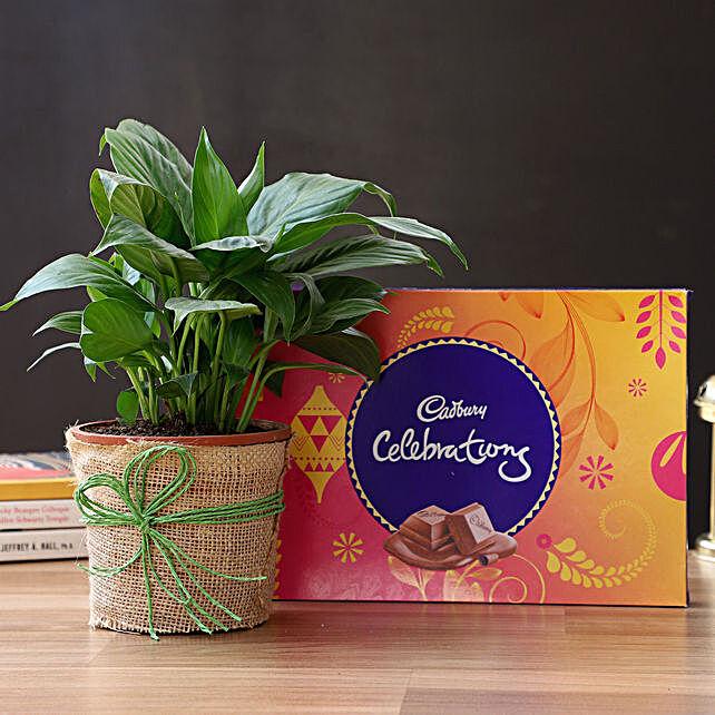 Beautiful Peace Lily Plant & Cadbury Chocolates