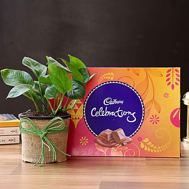 Money Plant & Cadbury Chocolates