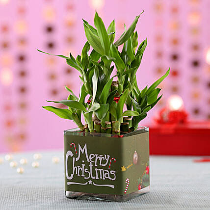 2 Layer Bamboo Plant Christmas Wishes
