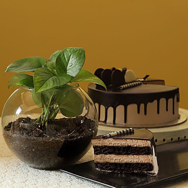 Eggless Chocolate Cake & Money Plant