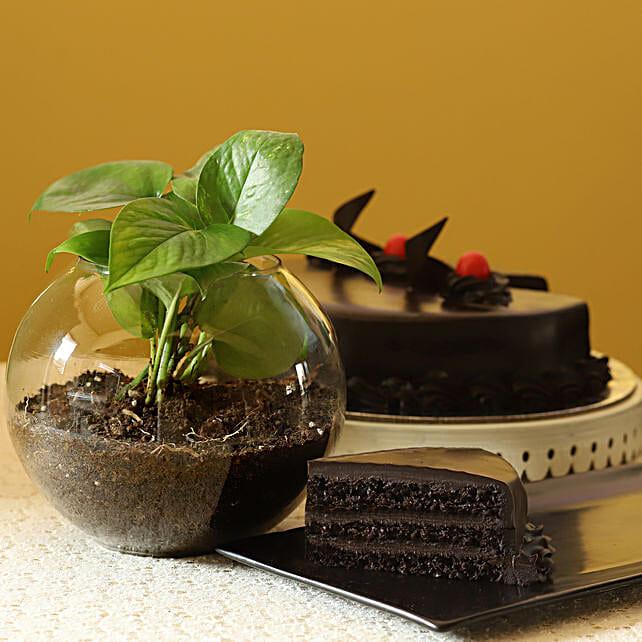 Eggless Truffle Cake & Money Plant