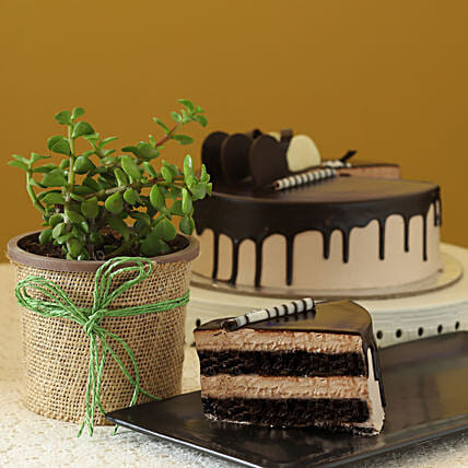 Online Jade Plant With Eggless  Cake