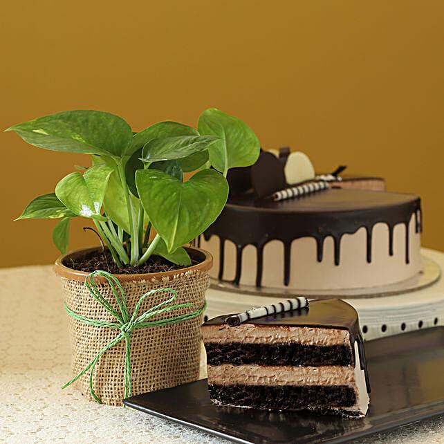 Money Plant & Eggless Chocolate Cake