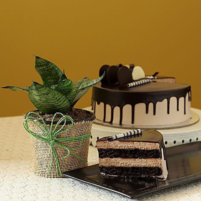 Sansevieria Plant & Eggless Chocolate Cake
