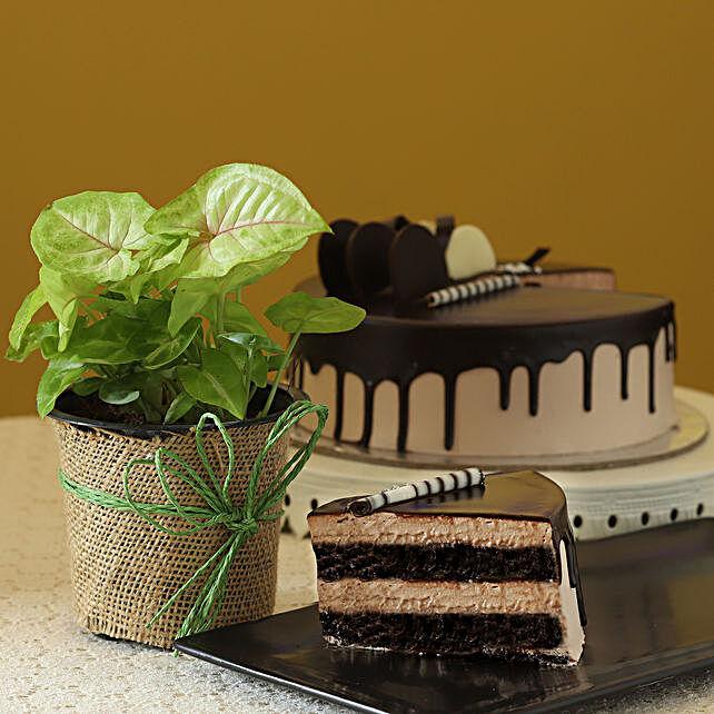 Syngonium Plant & Eggless Chocolate Cake