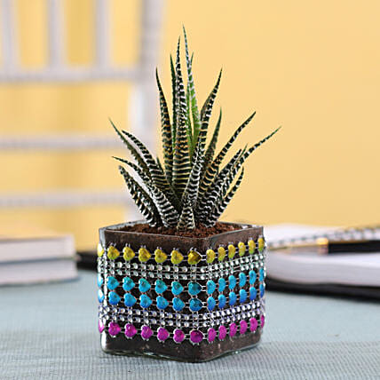 Plant In Decorated Glass Pot