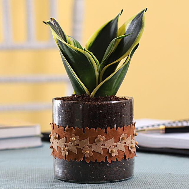 Plant in Cute Pot Online
