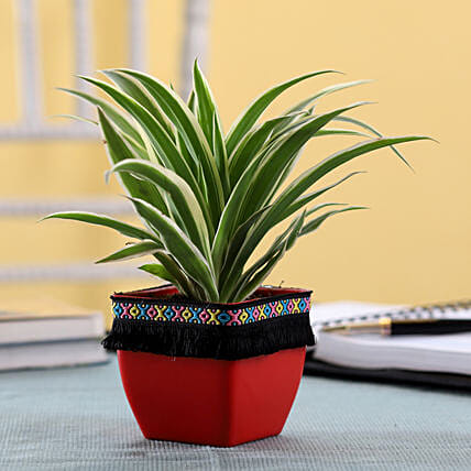 Indoor Plant For Home Online:Plastic Planters