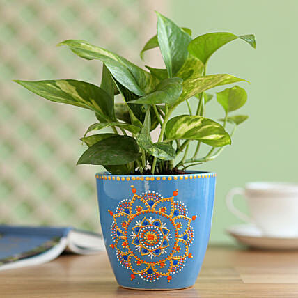 Gold King Money Plant in Hand Painted Mandala Planter