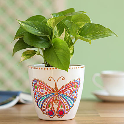 money plant in butterfly painted planter