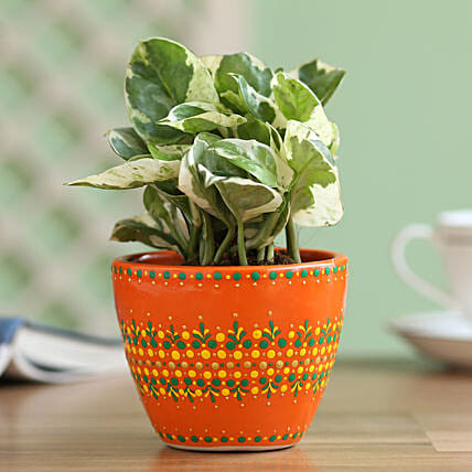 money plant in hand painted planter