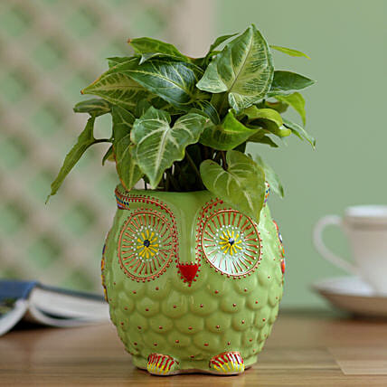 good luck plant in owl shape planter