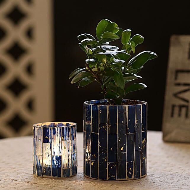 Ficus Compacta Plant In Blue Mosaic Art Glass Pot & Votive Holder